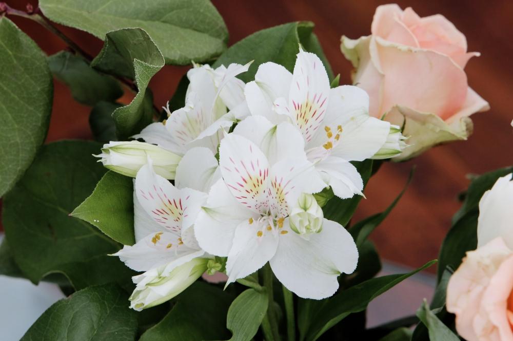 2015-03-Life-of-Pix-free-stock-photos-flowers